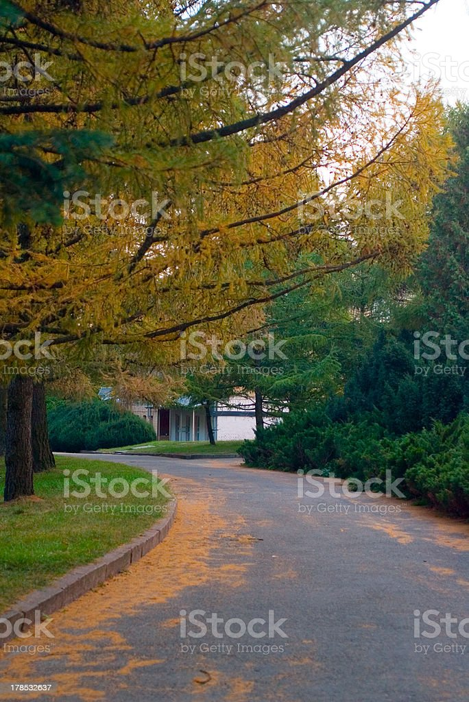 Alley in the park under pine trees stock photo