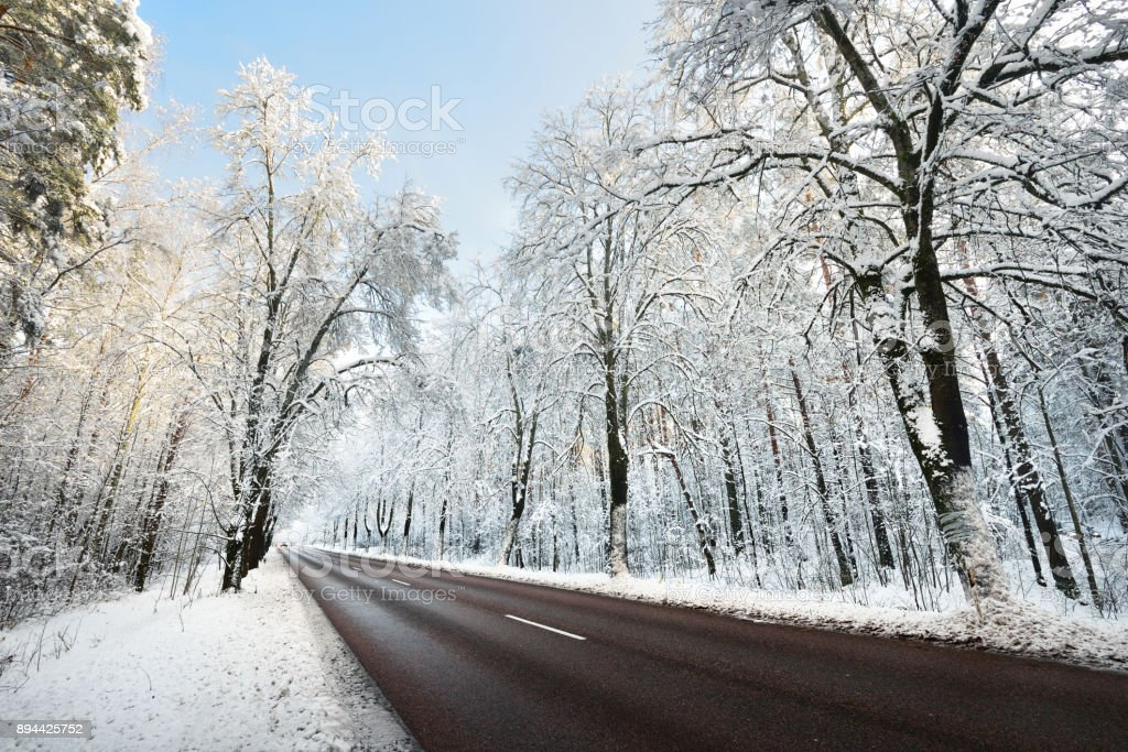 Alley of snow covered trees and the road in November. Winter wonderland in Riga, Latvia. stock photo