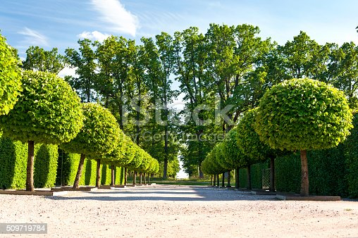 Alley of topiary green trees with hedge on background in ornamental garden of Rundale royal park on a blue sky background Latvia. Vibrant summertime outdoors horizontal image.