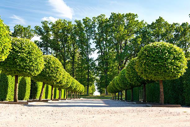 """galerie d """" art topiaire vert arbres ornementaux rundale royal jardin. - buis photos et images de collection"""
