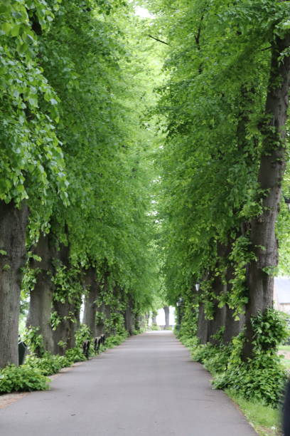 Alley A small alley between the fresh green trees alias stock pictures, royalty-free photos & images