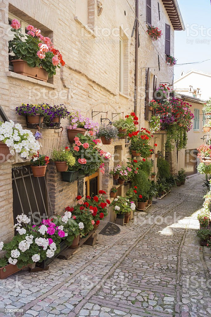 Alley with flower vases royalty-free stock photo