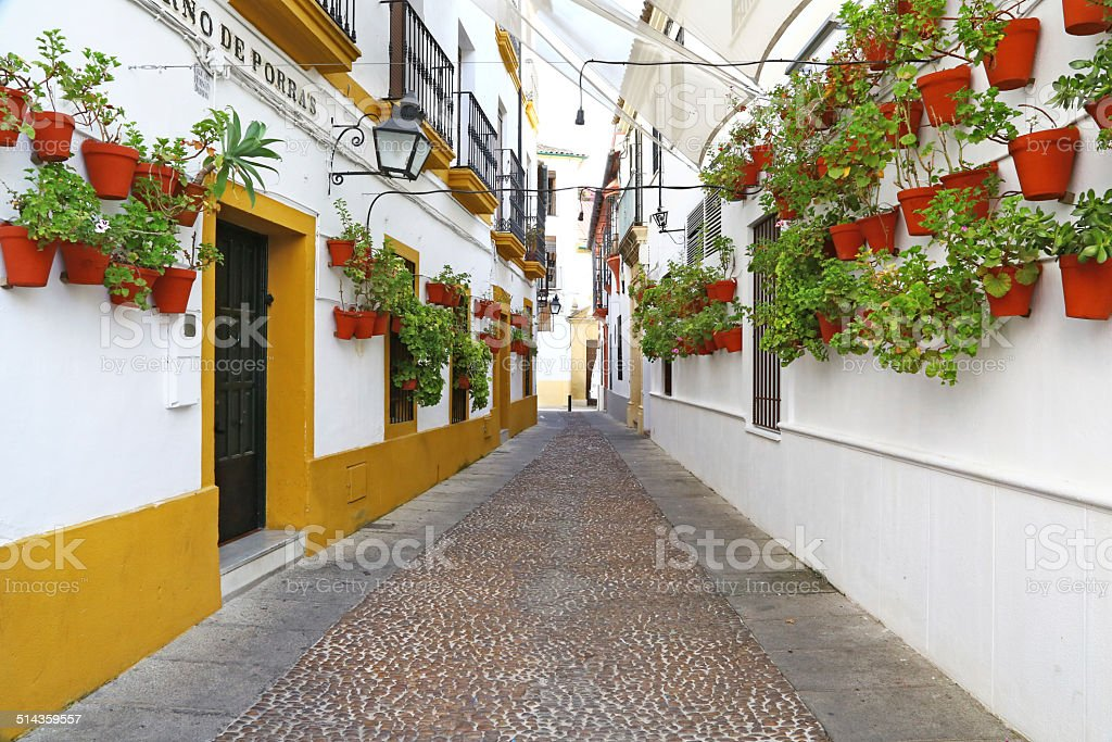 Alley with many flower pots in Cordoba stock photo