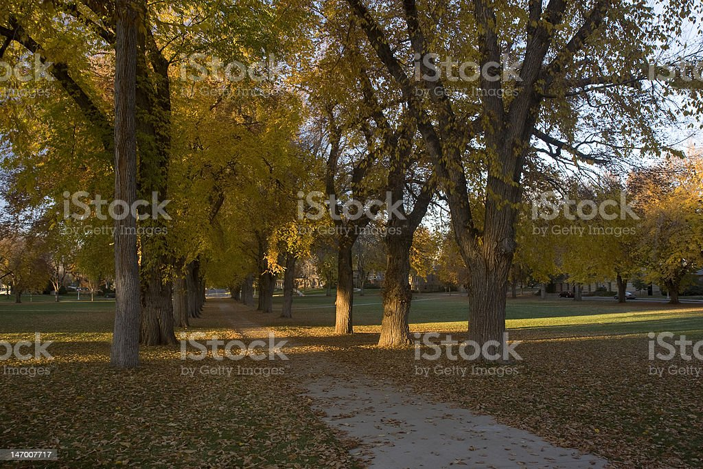 Alley with old American elm trees in fall colors royalty-free stock photo
