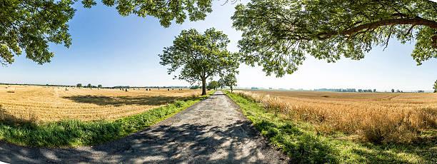 gasse mit alte eichen und old road in usedom - usedom stock-fotos und bilder