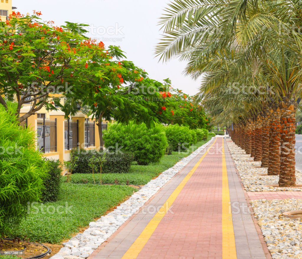 alley with palm trees - Royalty-free Aberto Foto de stock