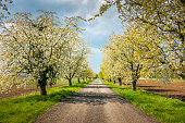 istock alley with trees beside 1279196763