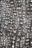 Alligator Juniper Bark Textured Pattern