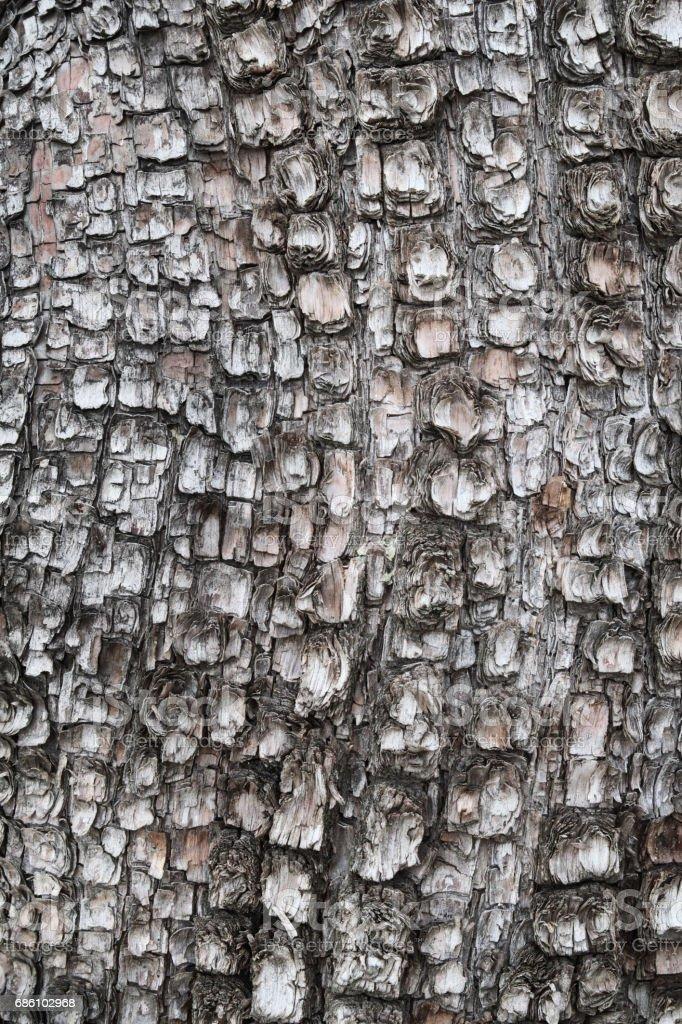 Alligator Juniper Bark Textured Pattern stock photo