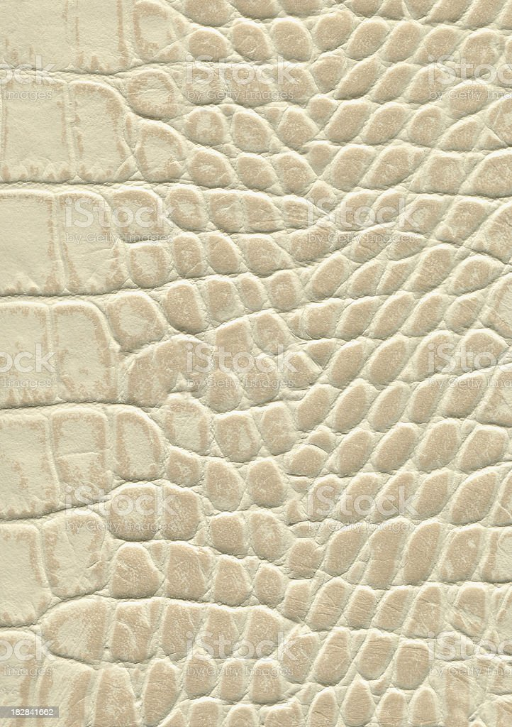 Alligator leather. stock photo