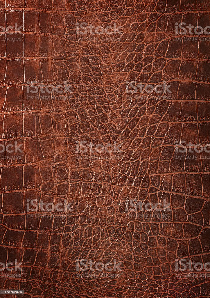Alligator Leather Skin stock photo
