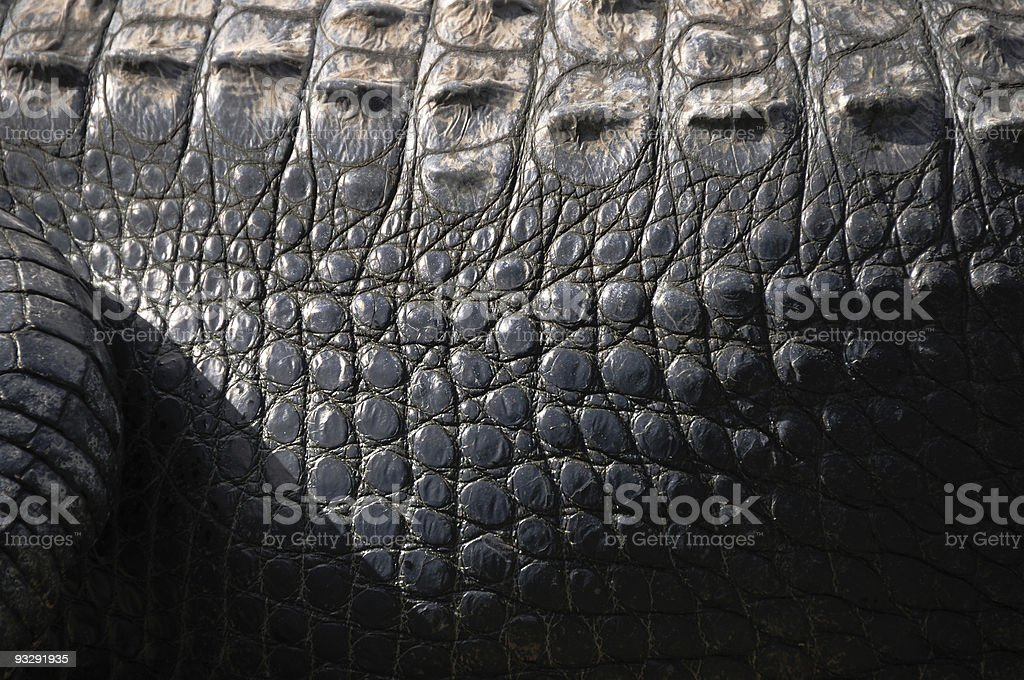 Alligator skin stock photo