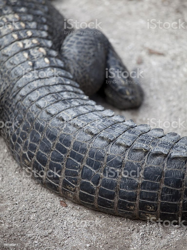 Alligator tail stock photo
