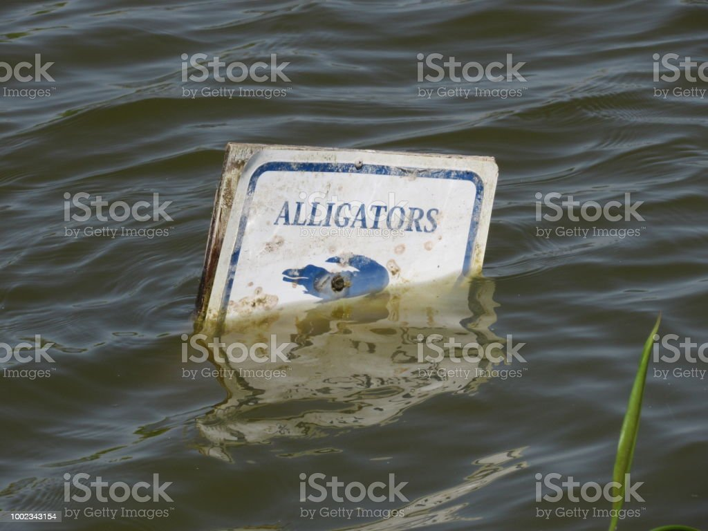 Alligator Warning stock photo