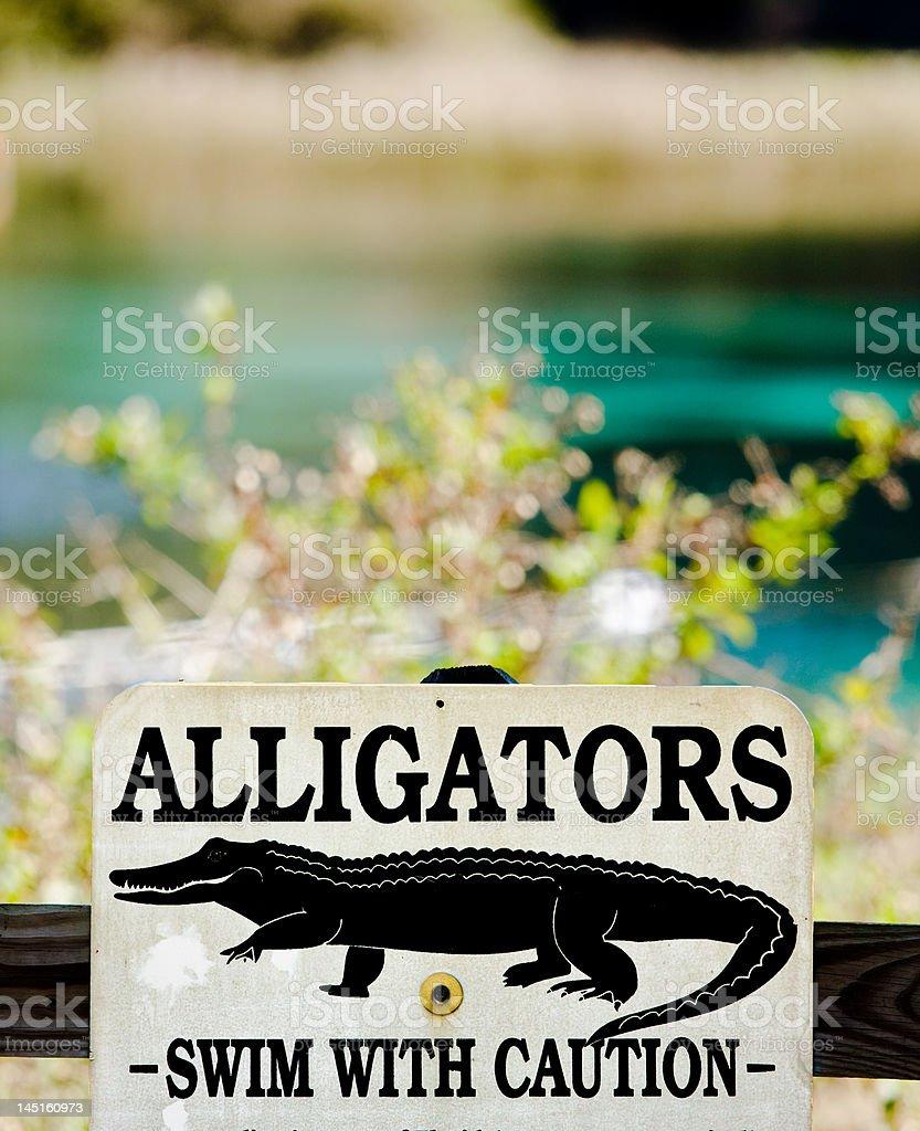 Alligator Warning stock photo