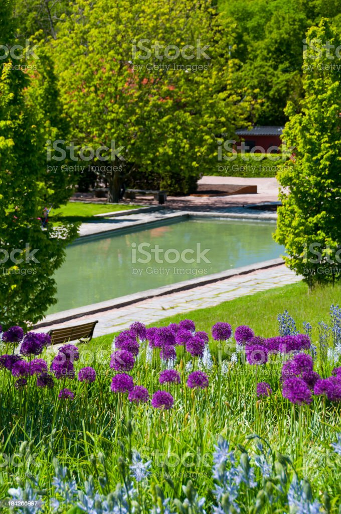 Allium and pond in Garden royalty-free stock photo