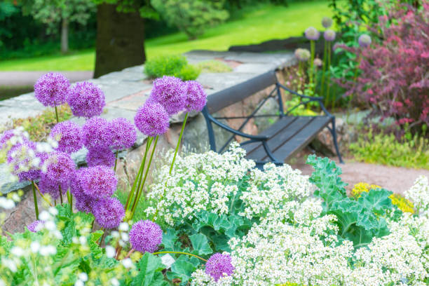 Allium flowers and wooden park bench foto