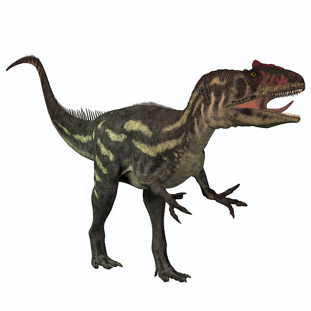 Allosaurus on White stock photo