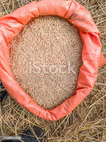 allot of rice packets are full of freshly cultivated rice