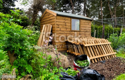 A Norfolk allotment in springtime, with a garden shed and stack of fencing ready to be installed. (Overcast day.)