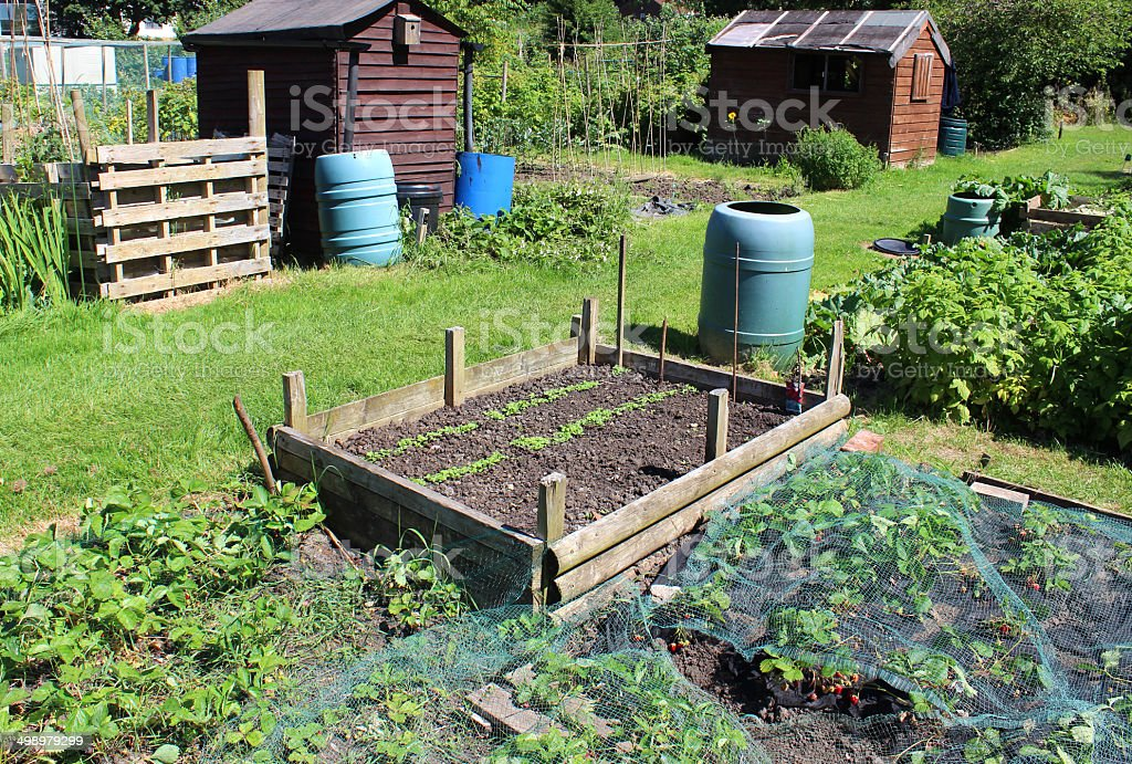 Allotment Vegetable Garden Image Strawberry Plants Raised