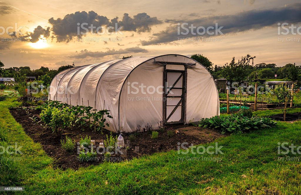 Allotments at sunset - Plastic Greenhouse stock photo
