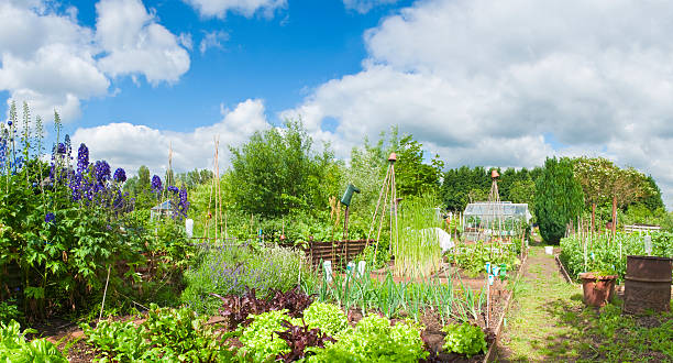 allotments in full bloom.  community garden stock pictures, royalty-free photos & images