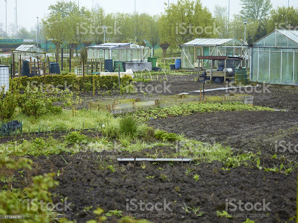 Allotments in winter royalty-free stock photo