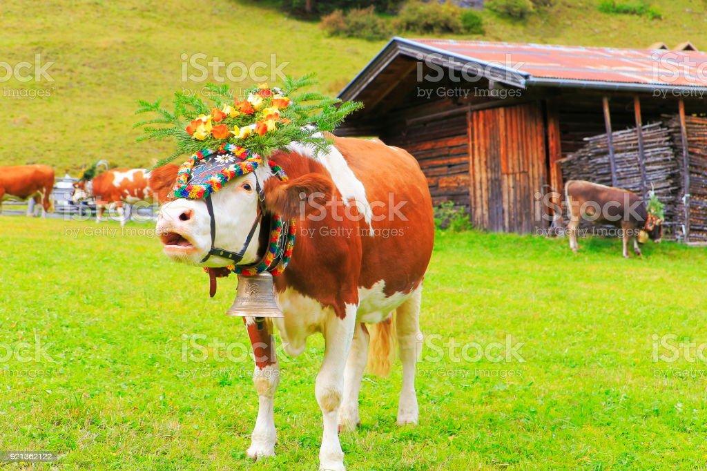 Almabtrieb: Cow mooing with flower crown – Zillertal alps, Tirol – Austria stock photo