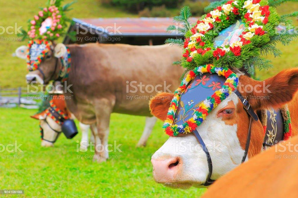 Almabtrieb: Kühe mit Blumen Kronen Parade – Zillertaler Alpen, Tirol-Österreich – Foto