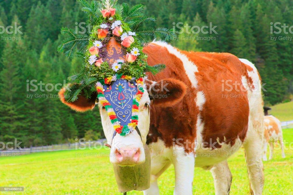 Almabtrieb: einsame Kuh mit Blume Krone Parade – Zillertaler Alpen, Tirol-Österreich – Foto