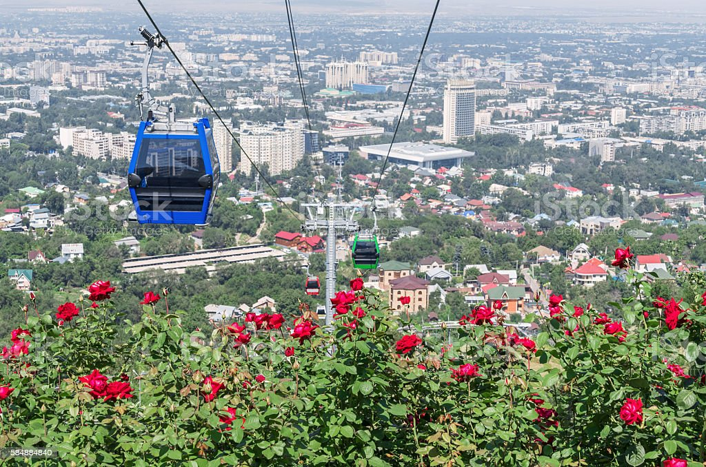 Almaty City Blooming Roses stock photo