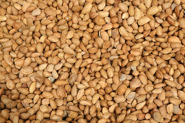 almendras - Almonds stock photo