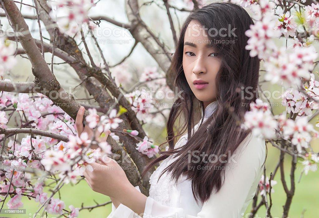 almond blossoms - Serenity Vietnamese girl in White Ao Dai stock photo