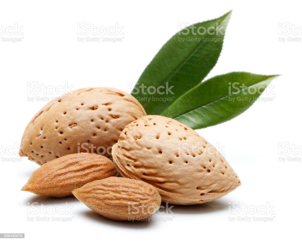 Almond nut isolated stock photo