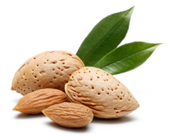 Almond nut isolated stock photo