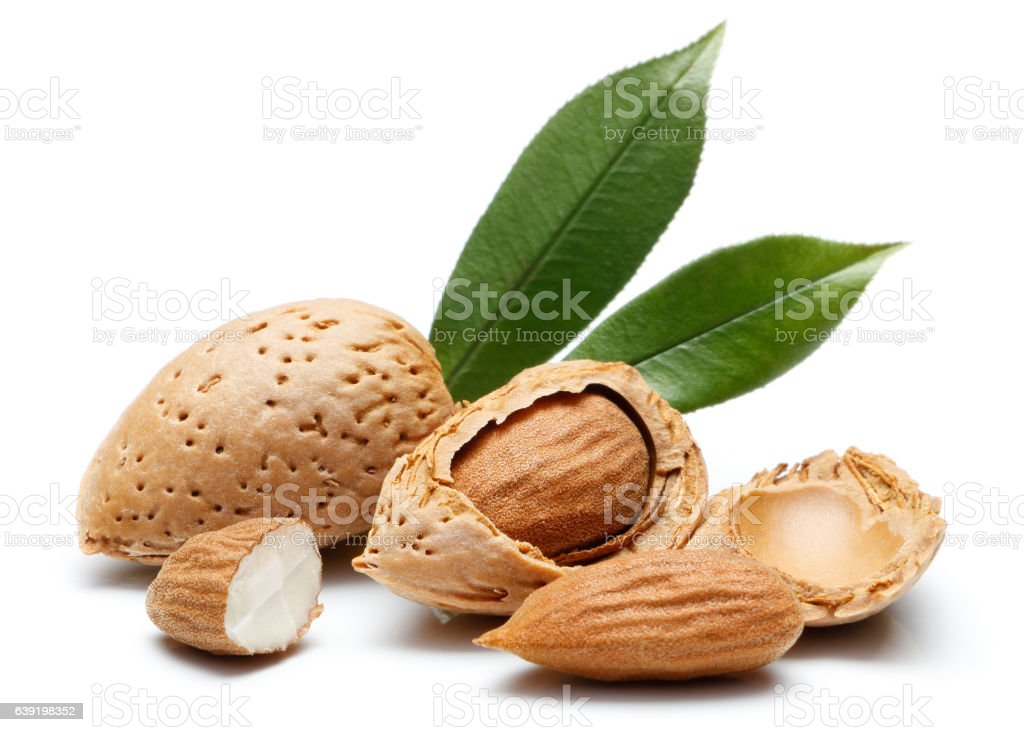Almond nut isolated - foto de stock