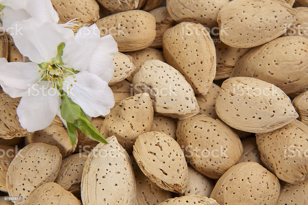 Almond nuts royalty-free stock photo