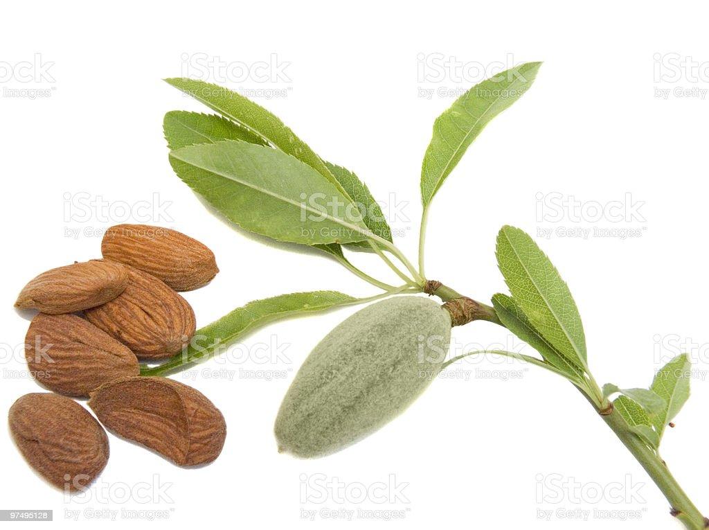 almond stock photo