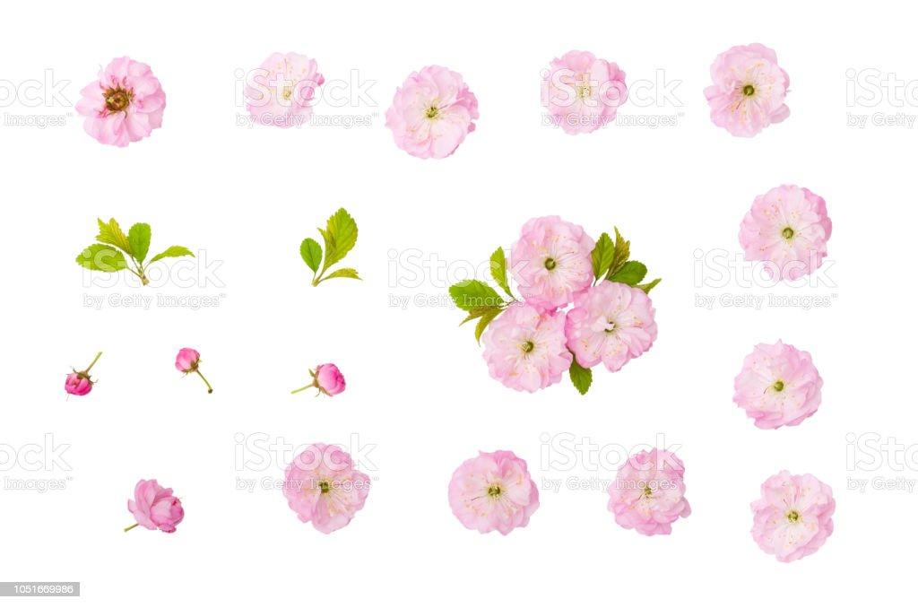 Badem pembe çiçekler, yeşil yaprakları ve kırpma yolu ile beyaz arka plan üzerinde izole bud - Royalty-free Aydınlık Stok görsel