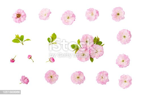 Isolated spring flowers. Almond pink flowers, green leaves and  bud isolated on white background with clipping path