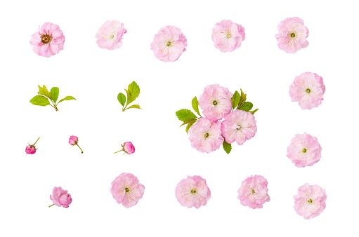 Badem Pembe Çiçekler Yeşil Yaprakları Ve Kırpma Yolu Ile Beyaz Arka Plan Üzerinde Izole Bud Stok Fotoğraflar & Aydınlık'nin Daha Fazla Resimleri