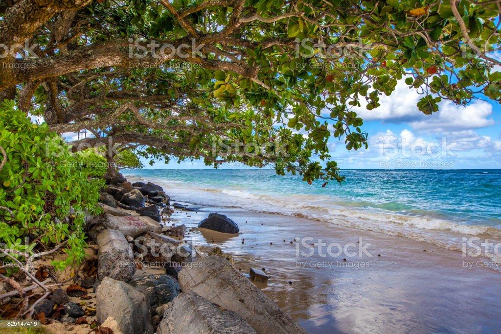 Almond trees on vacation stock photo
