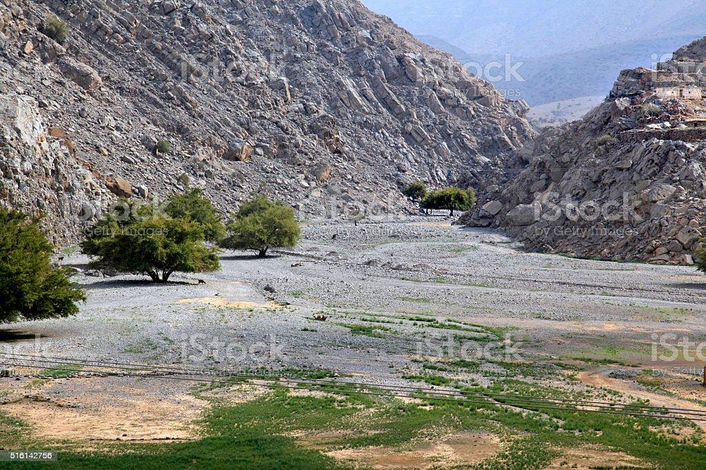 Almonds tress in Dry wadis of Jebel Harim, Musandam, Oman stock photo