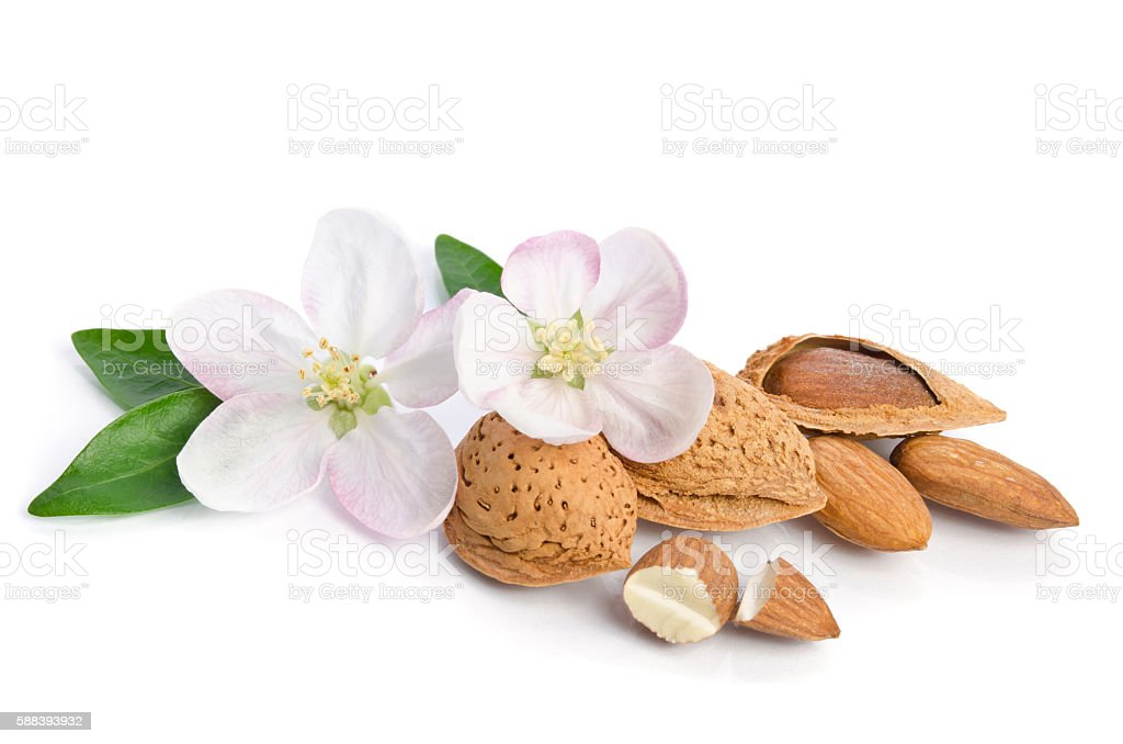 Almonds with leaves and flowers on the white background - foto de stock