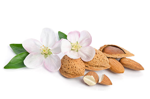 Almonds with leaves and flowers on the white background stock photo