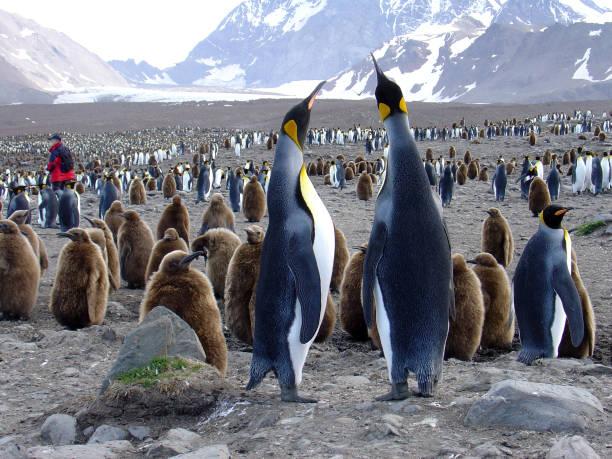 ほぼ一人 - 南極旅行 ストックフォトと画像