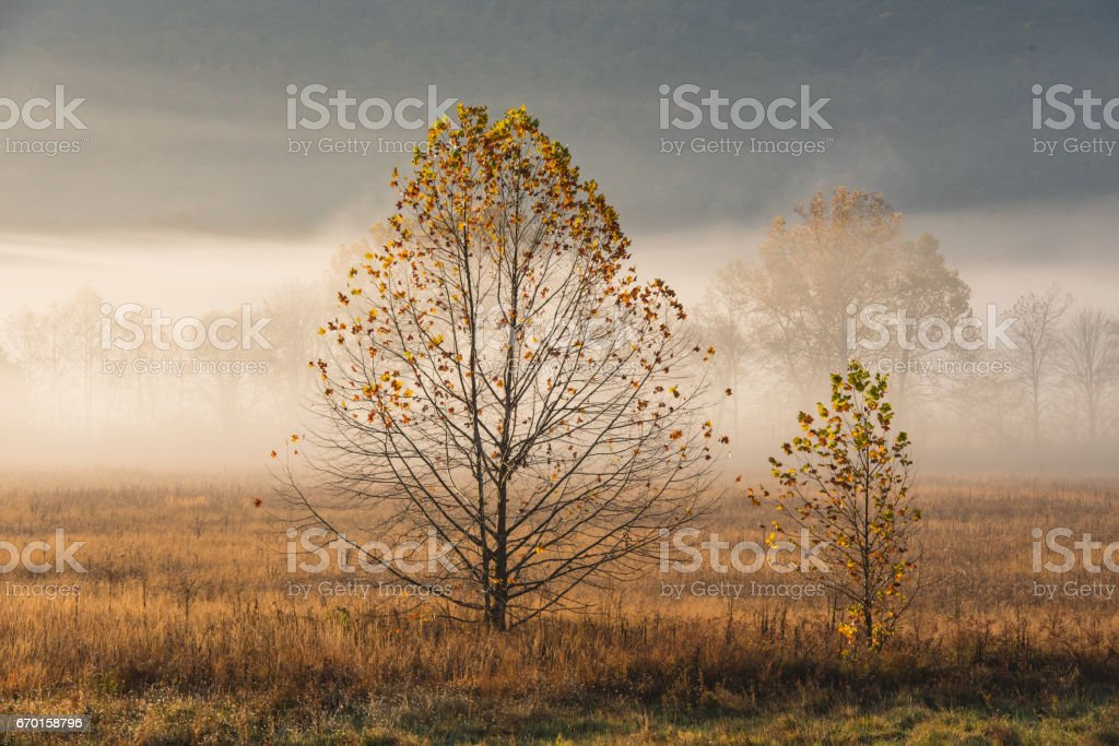 Almost Bare Trees in Foggy Valley stock photo