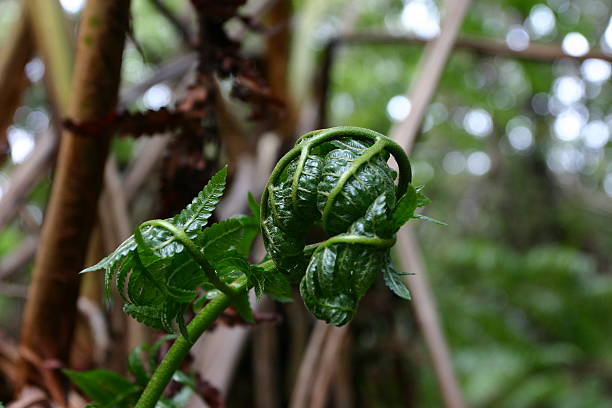 Almost Finished Unraveling Fern Frond stock photo