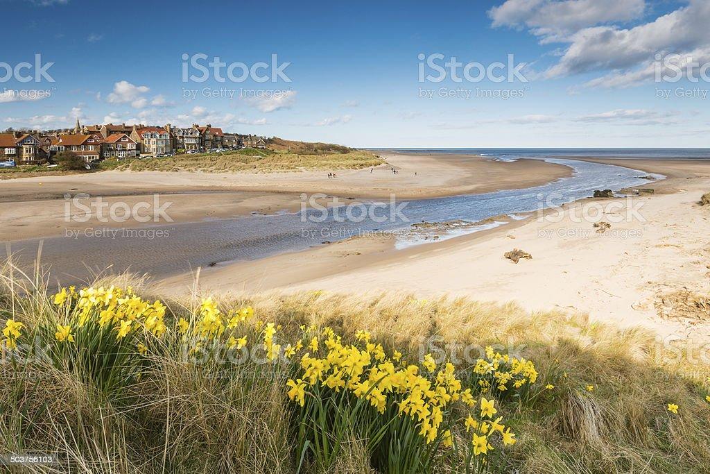 Alnmouth beach in spring stock photo